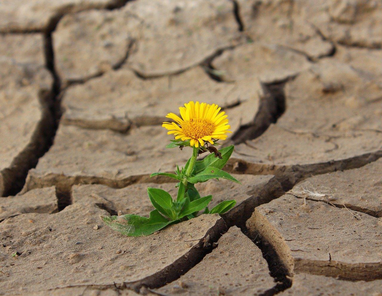 乾燥によって引き起こされるトラブル